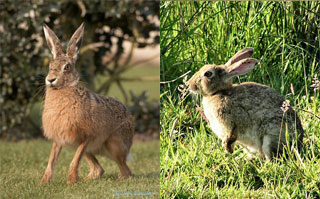 hare_vs_rabbit