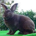 havanarabbit