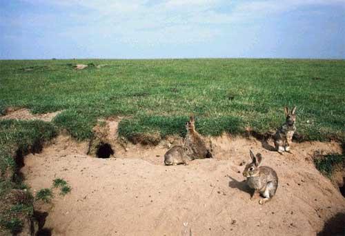 rabbit_warren