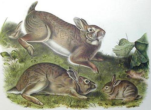 rabbits_painting
