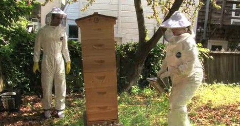 Is the City the Future for Honeybees? America's Only Urban Beekeeping Store Owner Thinks So